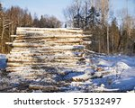 Felled Trees In The Forest In...