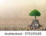 emerging seedlings on a stump... | Shutterstock . vector #575159185