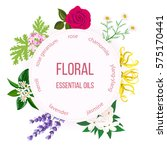 essential oil labels set. rose  ... | Shutterstock .eps vector #575170441
