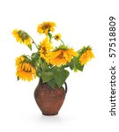 Withering Sunflowers In A Jug....