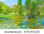 The Freshwater Swamp In Forest...