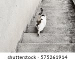 Cat Going Down The Stairs