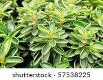 green leaf plant | Shutterstock . vector #57538225