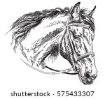 horse head with bridle in black ... | Shutterstock .eps vector #575433307