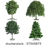 set of four trees isolated... | Shutterstock . vector #57545875