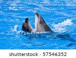 couple of dolphins dancing in...   Shutterstock . vector #57546352