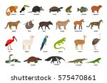 large set of animals of south... | Shutterstock .eps vector #575470861