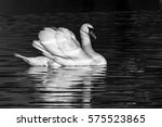 Swan In Black And White With...