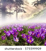 flowers in the sun on a... | Shutterstock . vector #575599909