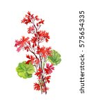 hand drawn branch of red...   Shutterstock . vector #575654335