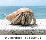Hermit Crab _ Face