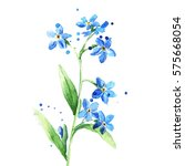 beauty forget me not single... | Shutterstock . vector #575668054