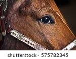Closeup Of Horse Face