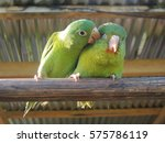 animal love | Shutterstock . vector #575786119