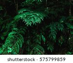 green forest jungle with shadow ... | Shutterstock . vector #575799859