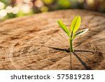 new life concept with seedling... | Shutterstock . vector #575819281