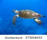 marine turtle underwater | Shutterstock . vector #575858455