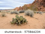 Close up of a cactus in the Valley of Fire, Nevada, USA. Succulents and other desert vegetation in sandy dunes, sky and red rocks in the background. Vegetation of an arid region in the United States.