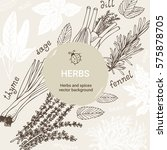 herbs vector set  culinary...