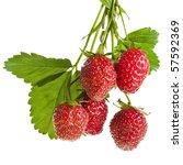 fresh strawberry fruits with... | Shutterstock . vector #57592369
