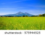 rapeseed field and mountains in ... | Shutterstock . vector #575944525