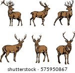 Deer  Deer Figure  Vector ...