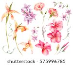 Stock photo watercolor set of vintage floral tropical natural elements exotic flowers twigs and leaves 575996785