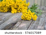 yellow flowers. medicinal... | Shutterstock . vector #576017089