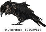 raven isolated on white    high ... | Shutterstock .eps vector #576059899