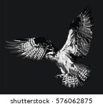 vector illustration of osprey   ... | Shutterstock .eps vector #576062875
