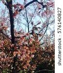 flower    Shutterstock . vector #576140827