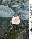 flower  | Shutterstock . vector #576140977