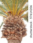 Closeup of palm tree trunk and branches isolated on white. - stock photo