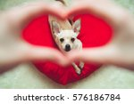 Stock photo pet and people love concept puppy in heart shape 576186784