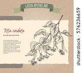 tilia cordata aka small leaved... | Shutterstock .eps vector #576236659