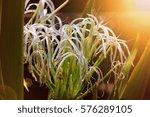 flowers in the australian... | Shutterstock . vector #576289105