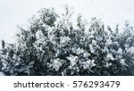 winter background with frosty... | Shutterstock . vector #576293479