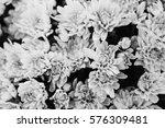 chrysanthemum yellow background ... | Shutterstock . vector #576309481
