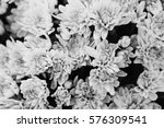 chrysanthetum yellow background ... | Shutterstock . vector #576309541