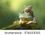 Stock photo flying frog sitting on body beautiful tree frog on branch rachophorus reinwardtii javan tree frog 576319201