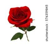 bunch of rose flowers on white... | Shutterstock . vector #576359845