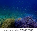philippines palawan coron...   Shutterstock . vector #576432085