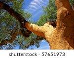 Oaks Tree At Portugal.