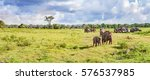 panorama with elephants and... | Shutterstock . vector #576537985