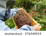 Honeycomb With Bees In Hands O...