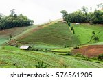 vegetable field at top view of... | Shutterstock . vector #576561205