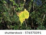 leaf spot diseases | Shutterstock . vector #576570391