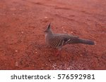 a bird in national park ... | Shutterstock . vector #576592981