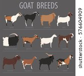 Goat Breeds Icon Set. Animal...