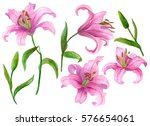 Stock photo watercolor flower set hand drawn illustration of lilies bright floral elements isolated on white 576654061